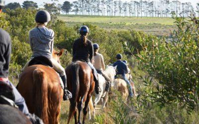 Heaven & Earth Horse Trails