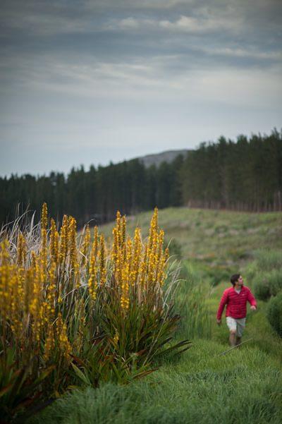 Bosman Hermanus Hike Nature Trail Outdoor Family
